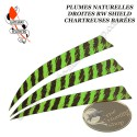GATEWAY FEATHERS Plumes naturelles barrées RW Shield