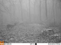 Photo de la Bushnell Trophy Cam HD Wireless chez THS