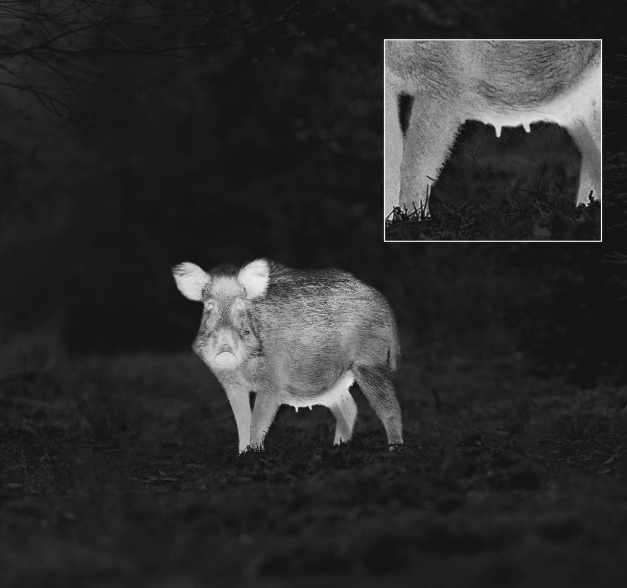 Vision nocturne thermique Zeiss DTI 3/35